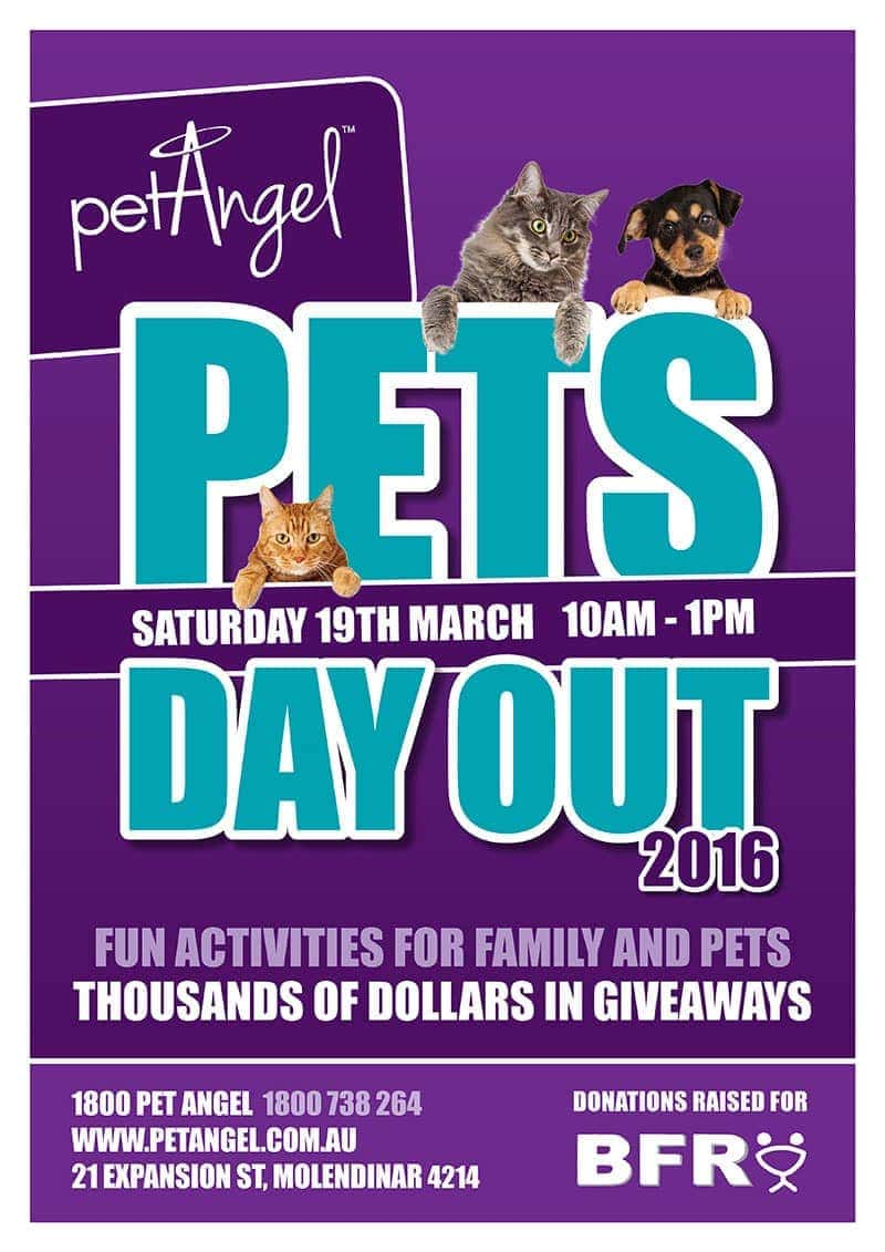 Pet Angel's Pet's Day Out