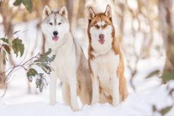 Puppy Tales Photo Challenge ~ Buddies