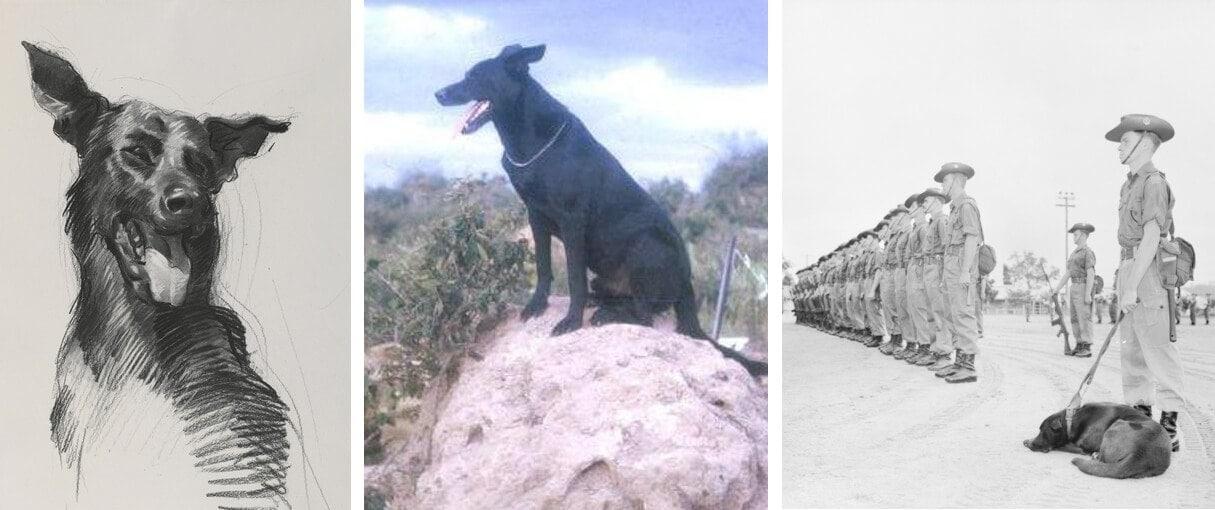 Australian Military Dog ~ Caesar ~ Vietnam War