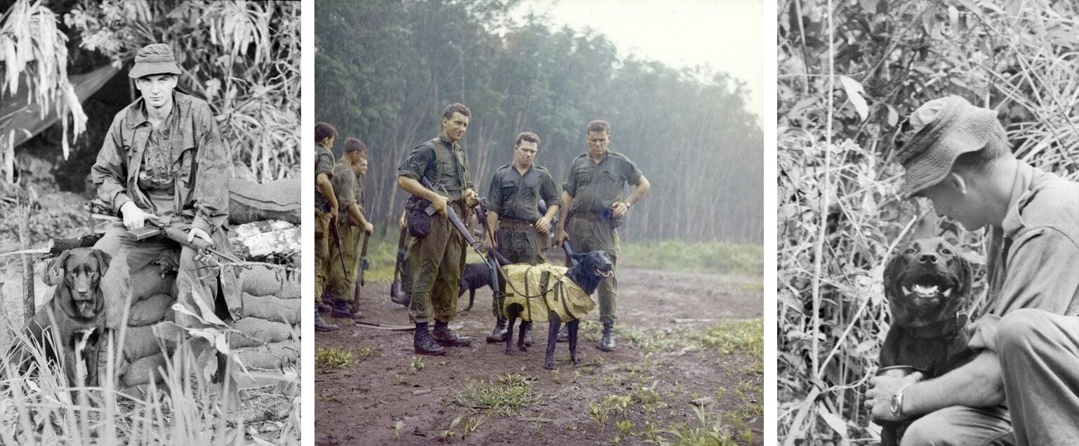 Australian Military Dog ~ Justin ~ Vietnam War