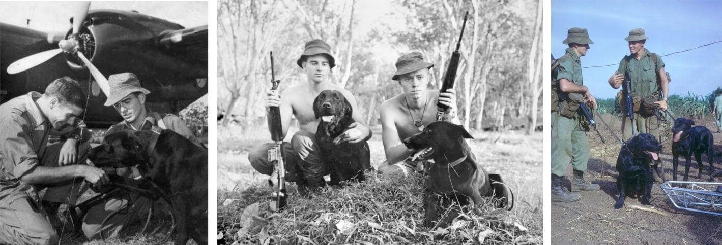 Australian Military Dog ~ Marcus ~ Vietnam War