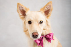 Puppy Tales Photo Challenge ~ Bows & Bowties