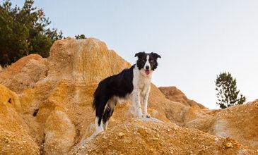 Puppy Tales Photo Challenge ~ Adventure Dog