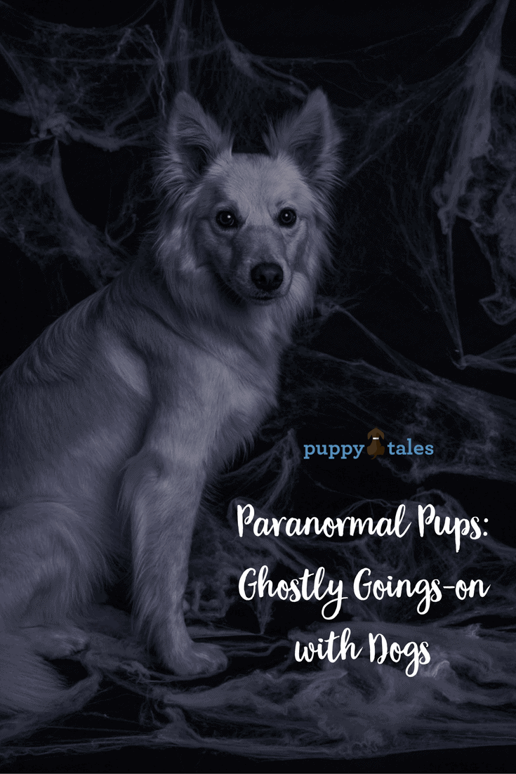 Paranormal Pups- Ghostly Goings-on with Dogs {pinterest}