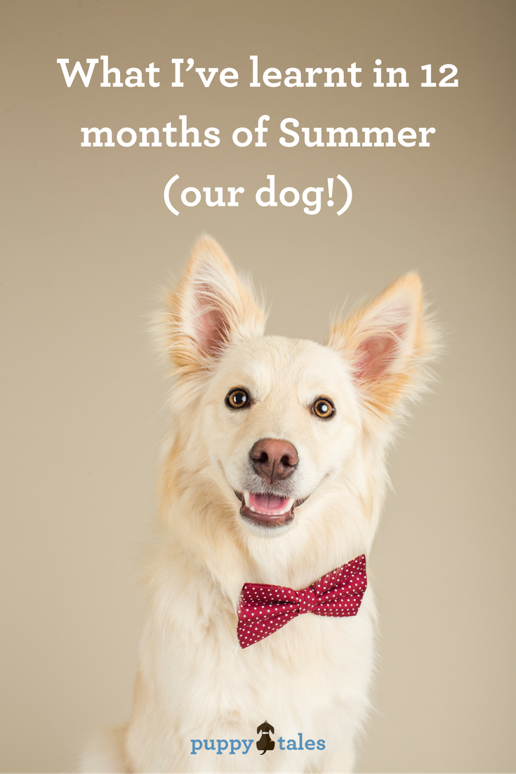 What I've learnt in 12 months of Summer (our dog)