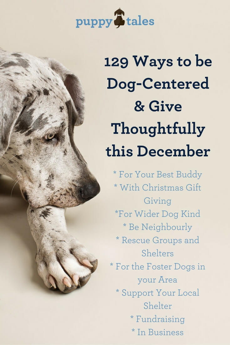 129 Ways to be Dog-Centered and Give Thoughtfully this December