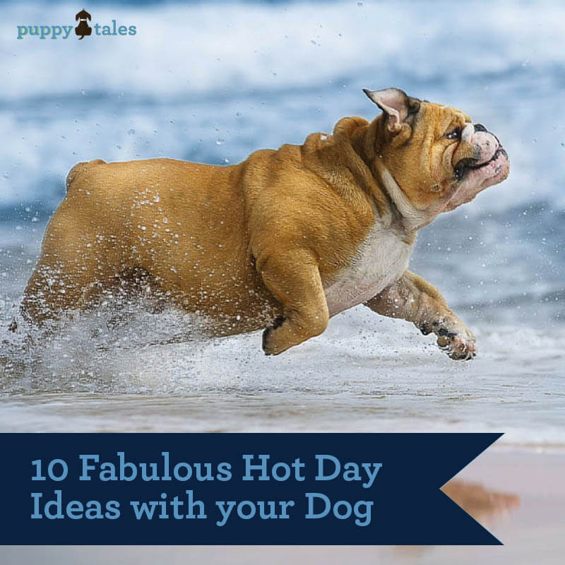On a hot day, wake early and head to the beach with your dog