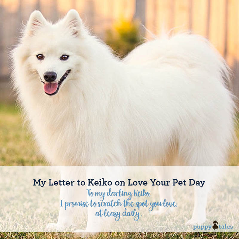 Love your Pet Day. The promises I've made to my gorgeous Japanese Spitz Keiko to mark the date.