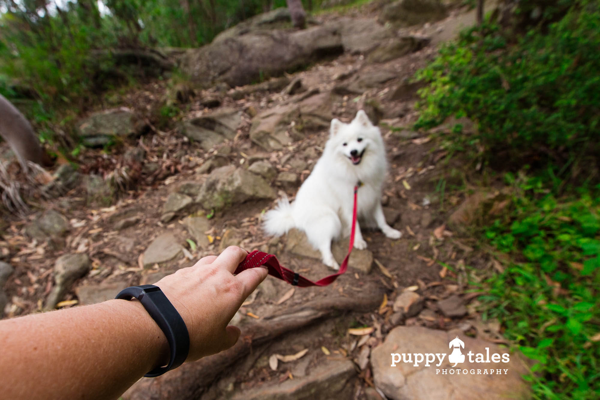 Hiking with Keiko the Japanese Spitz is a great way to stay fit and healthy