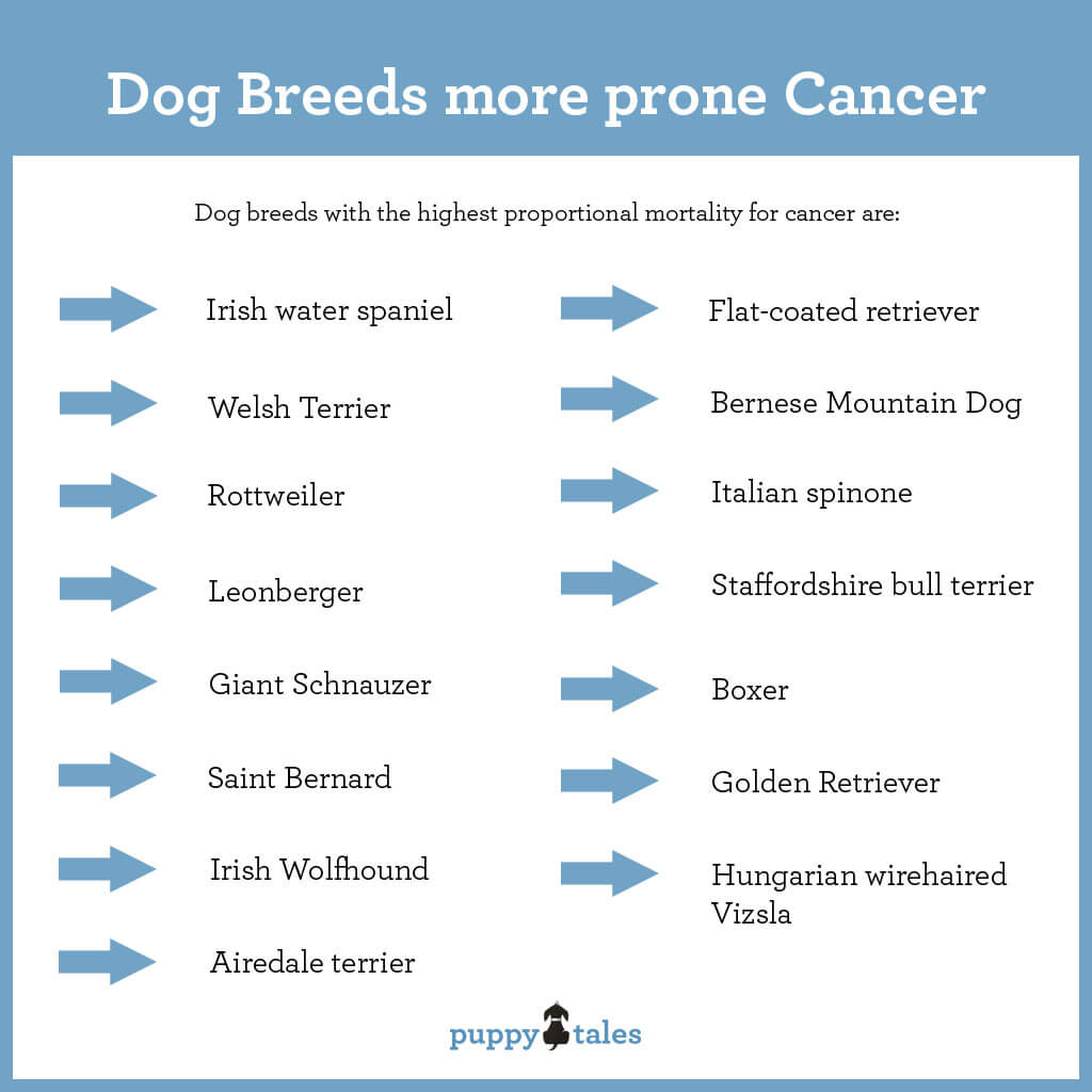Canine Cancer – Information for dog owners