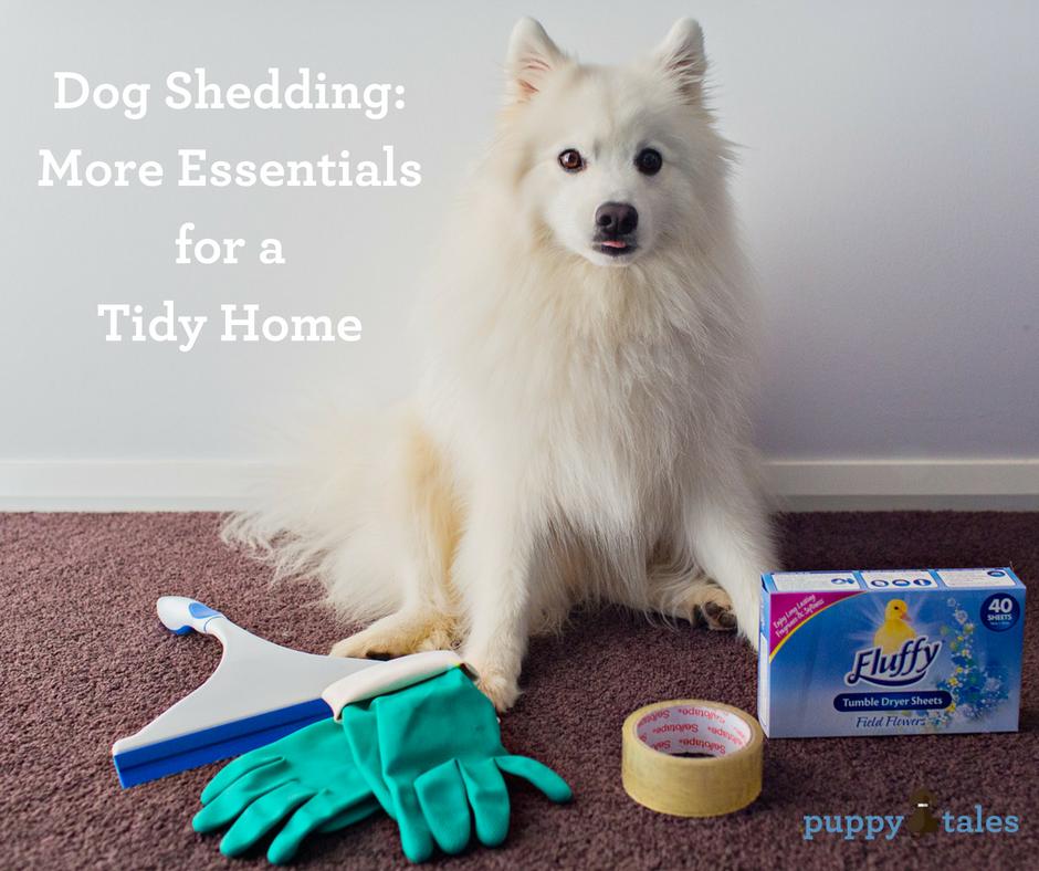 Dog Shedding: More Essentials for a Tidy Home