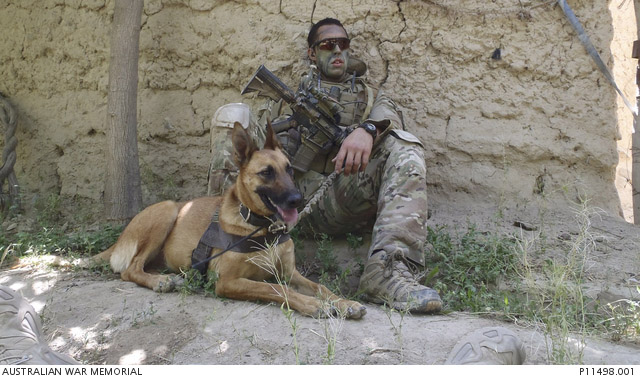 Service dogs of the Afghan War: Xena