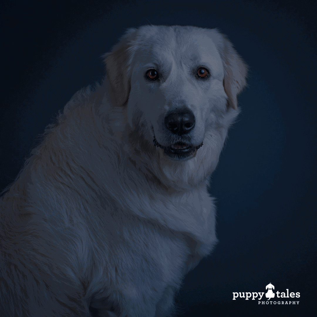 Halloween Dog Tales ~ Franklin the Ghost Dog