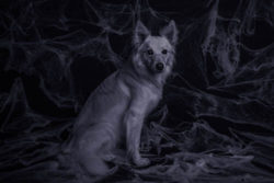 paranormal-pups-ghostly-goings-on-with-dogs-preview