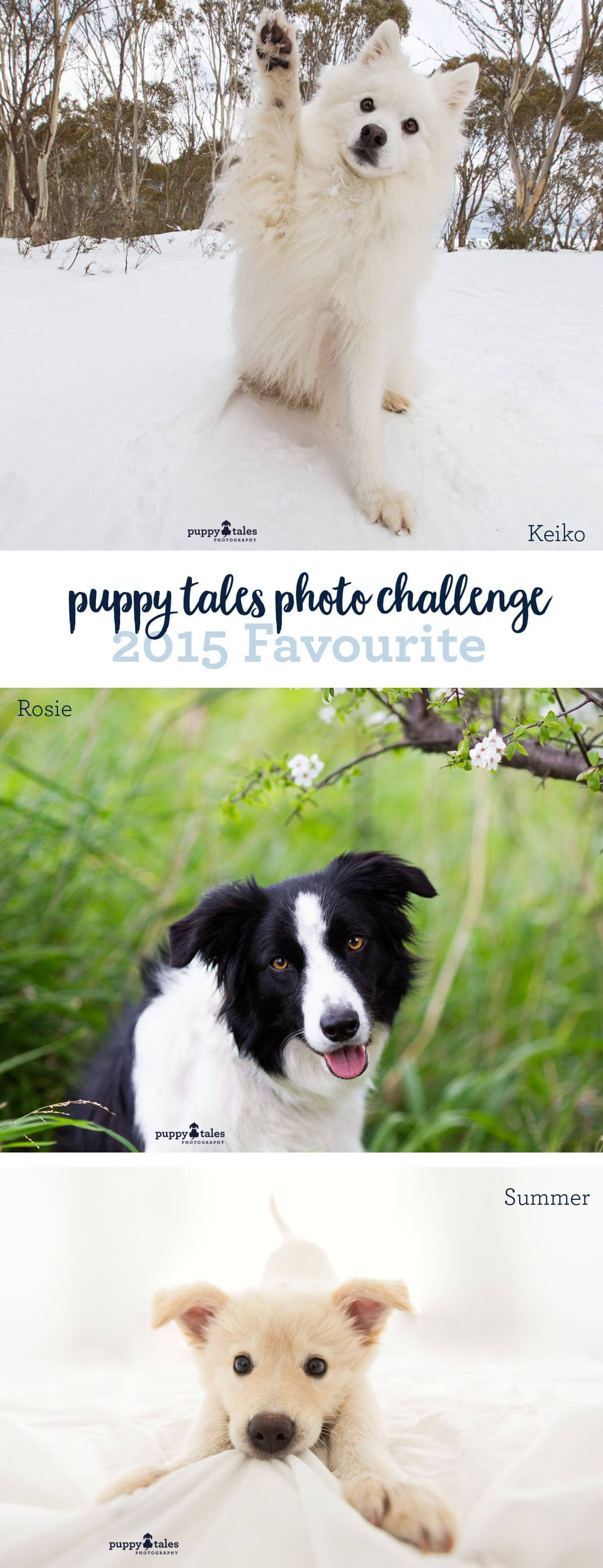 Puppy Tales Photo Challenge ~ 2015 Favourite