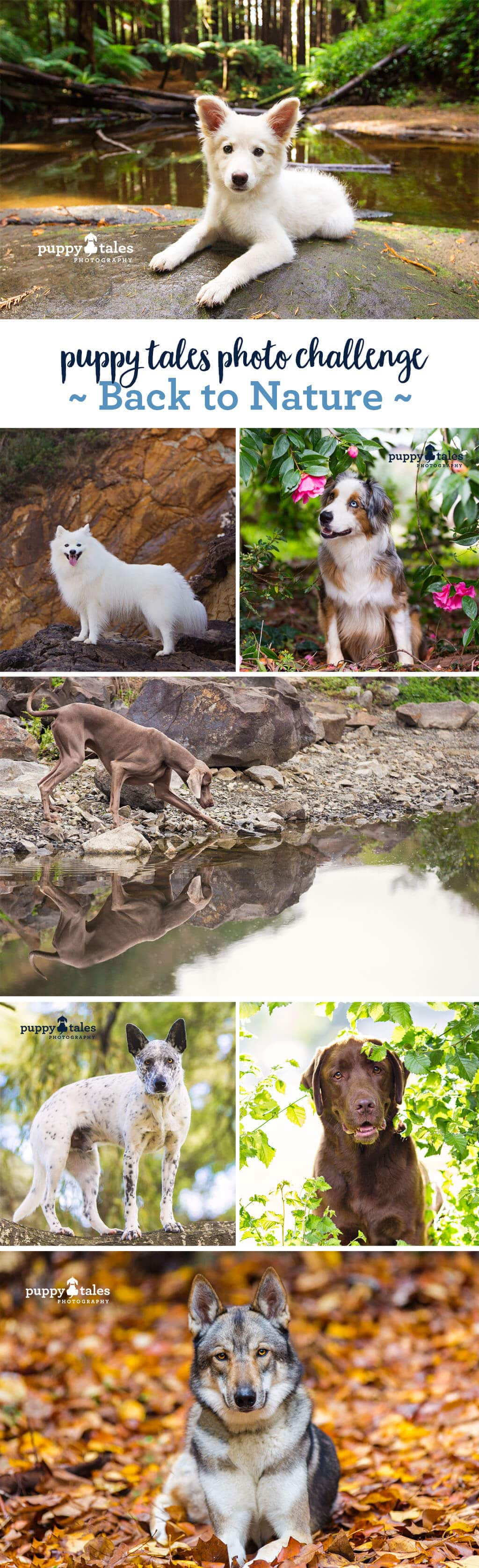 Puppy Tales Photo Challenge ~ Back to Nature