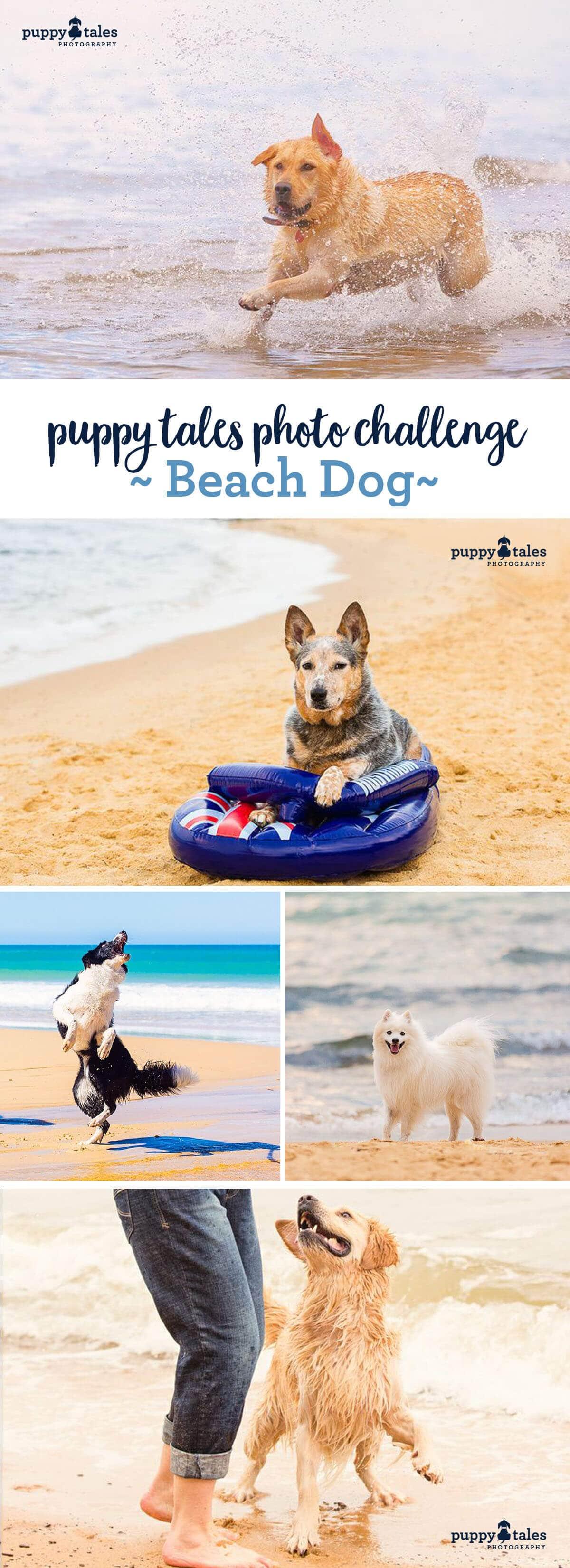Puppy Tales Photo Challenge - Beach Dog