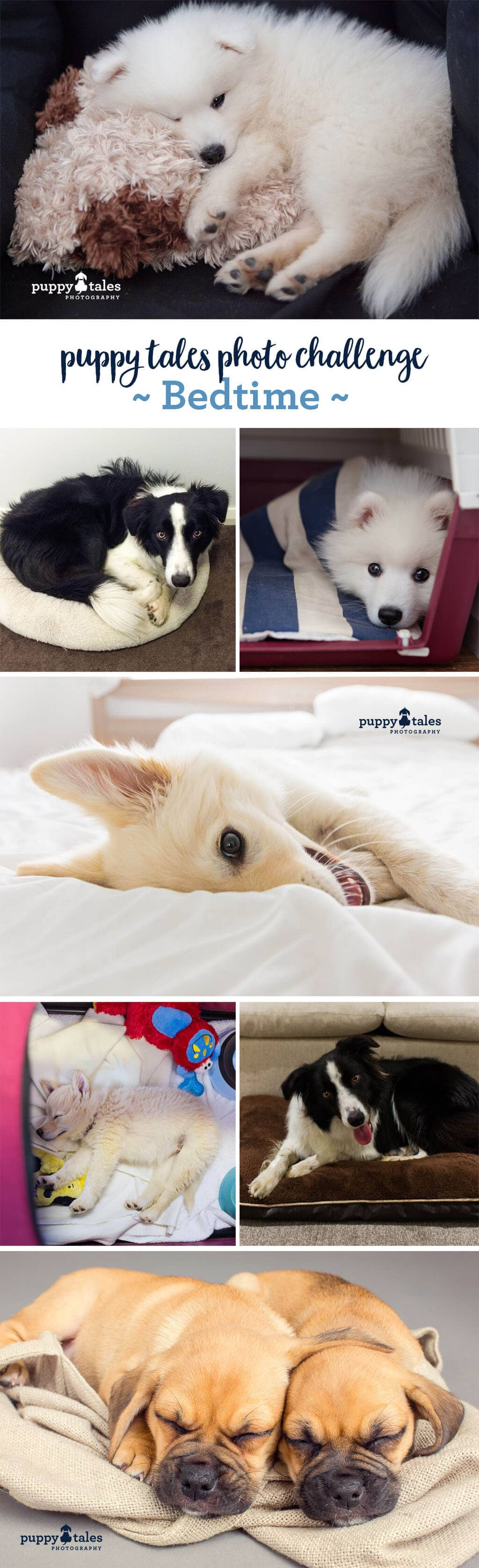 Puppy Tales Photo Challenge ~ Bedtime