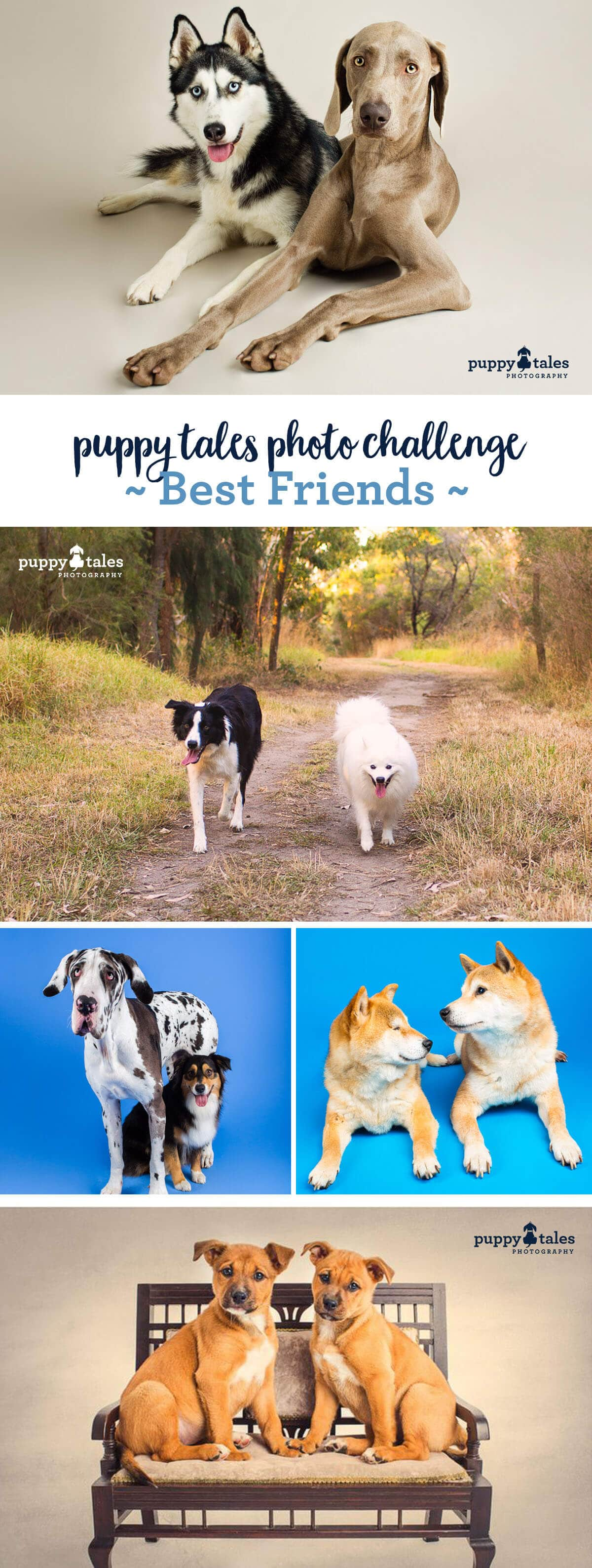 Cute Dogs that are Best Friends