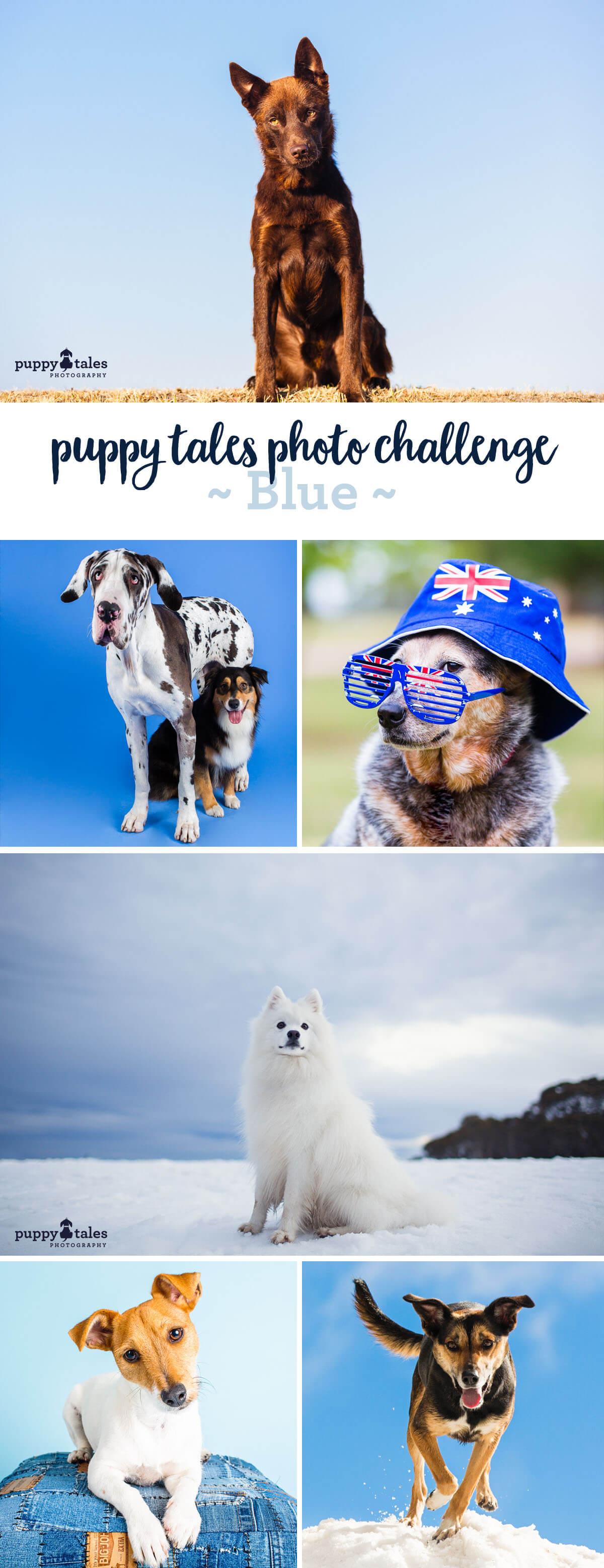 Photo Challenge - Blue