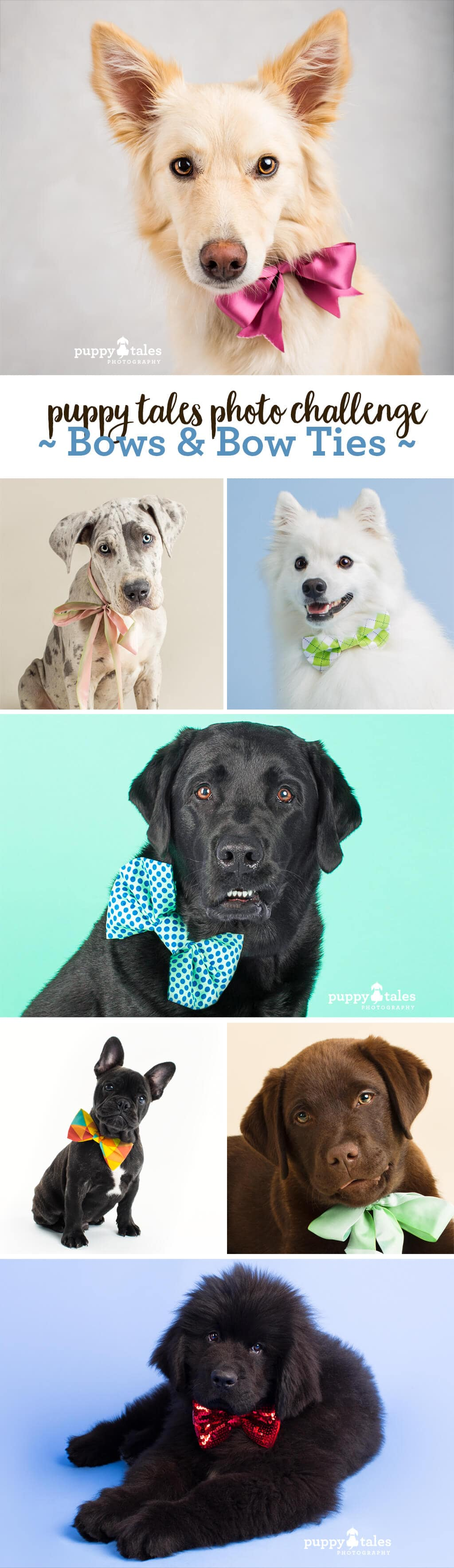 Puppy Tales Photo Challenge ~ Bows & Bow Ties