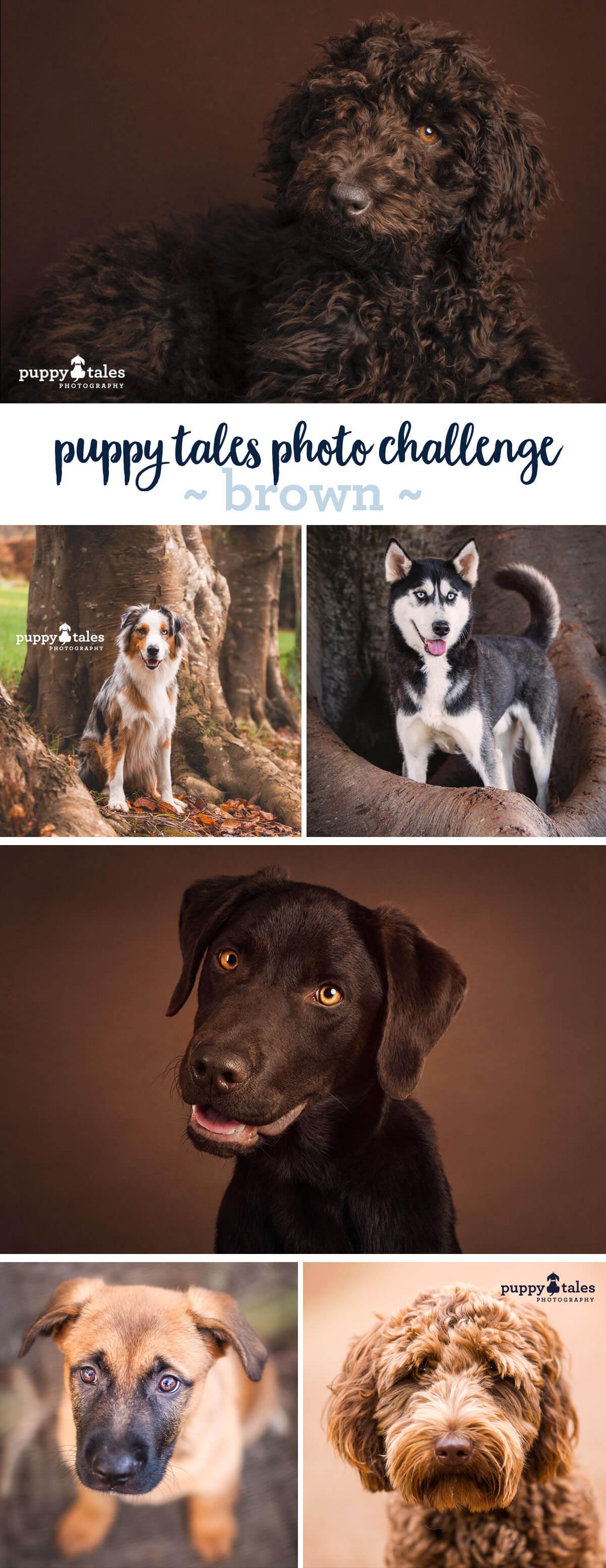 Puppy Tales Photo Challenge ~ Brown