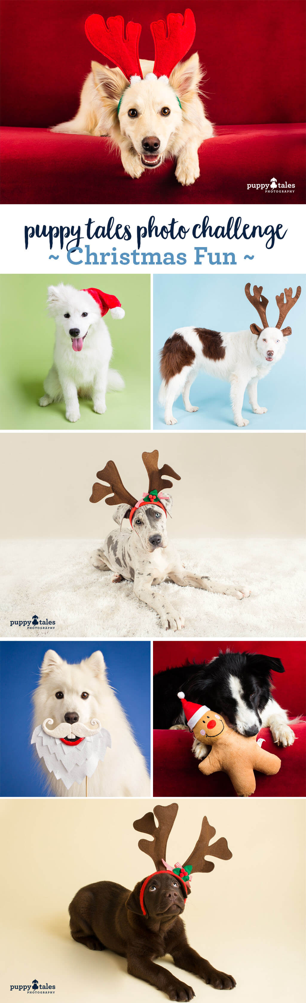 Puppy Tales Photo Challenge ~ Christmas Fun