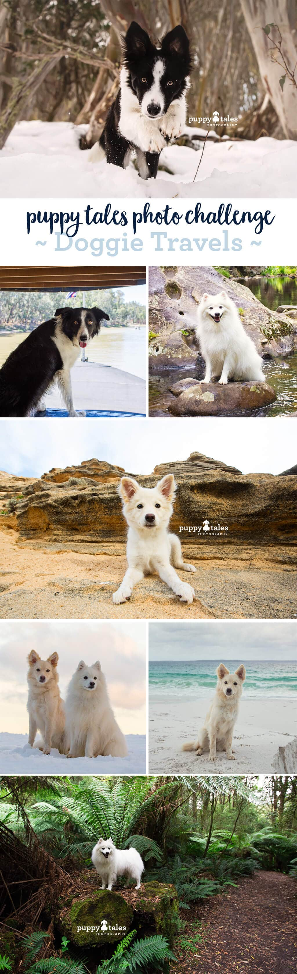 Puppy Tales Photo Challenge ~ Travel