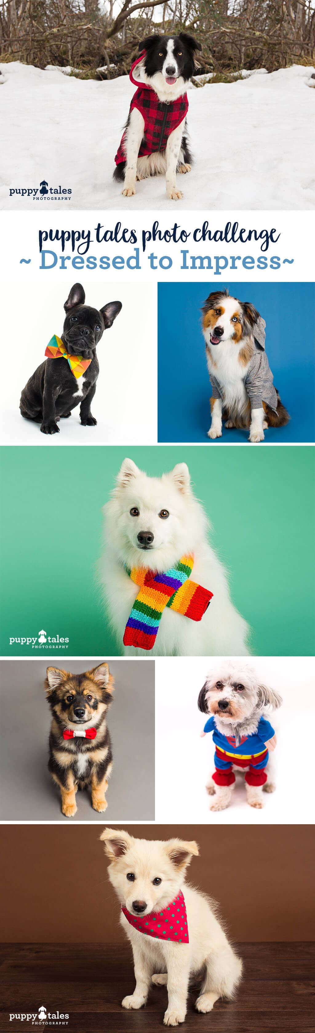 Puppy Tales Photo Challenge ~ Dressed to Impress
