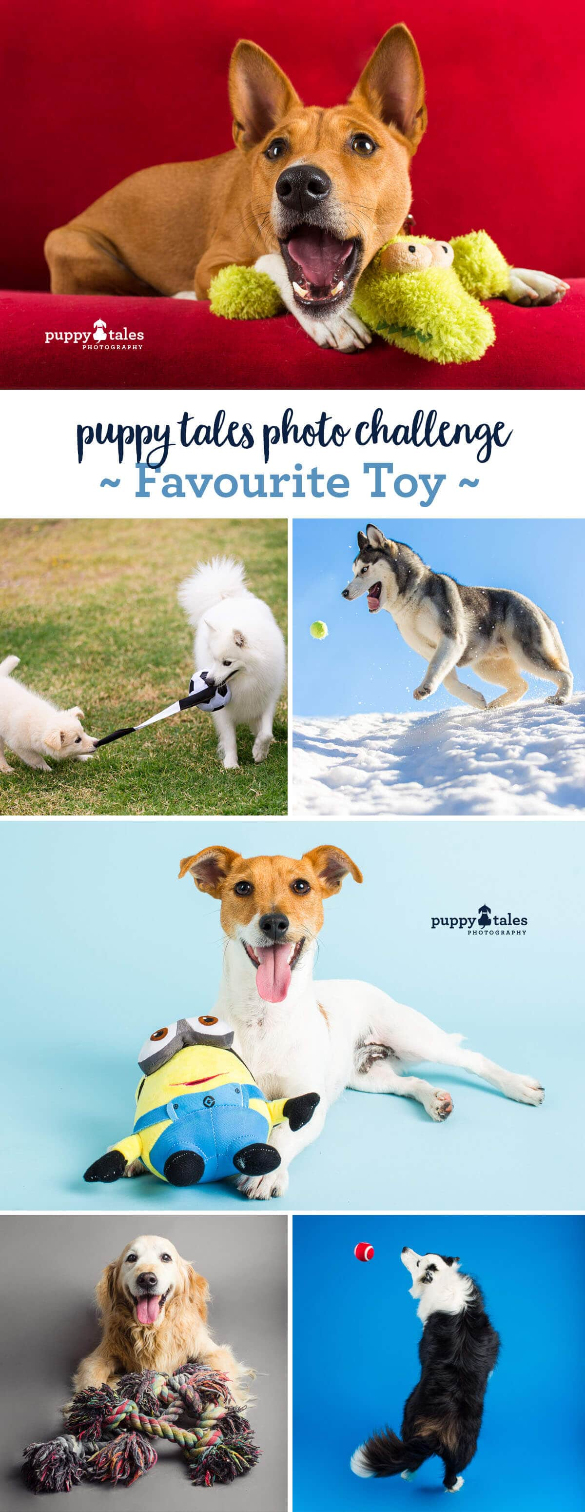 Puppy Tales Dog Photo Challenge ~ Favourite Toy