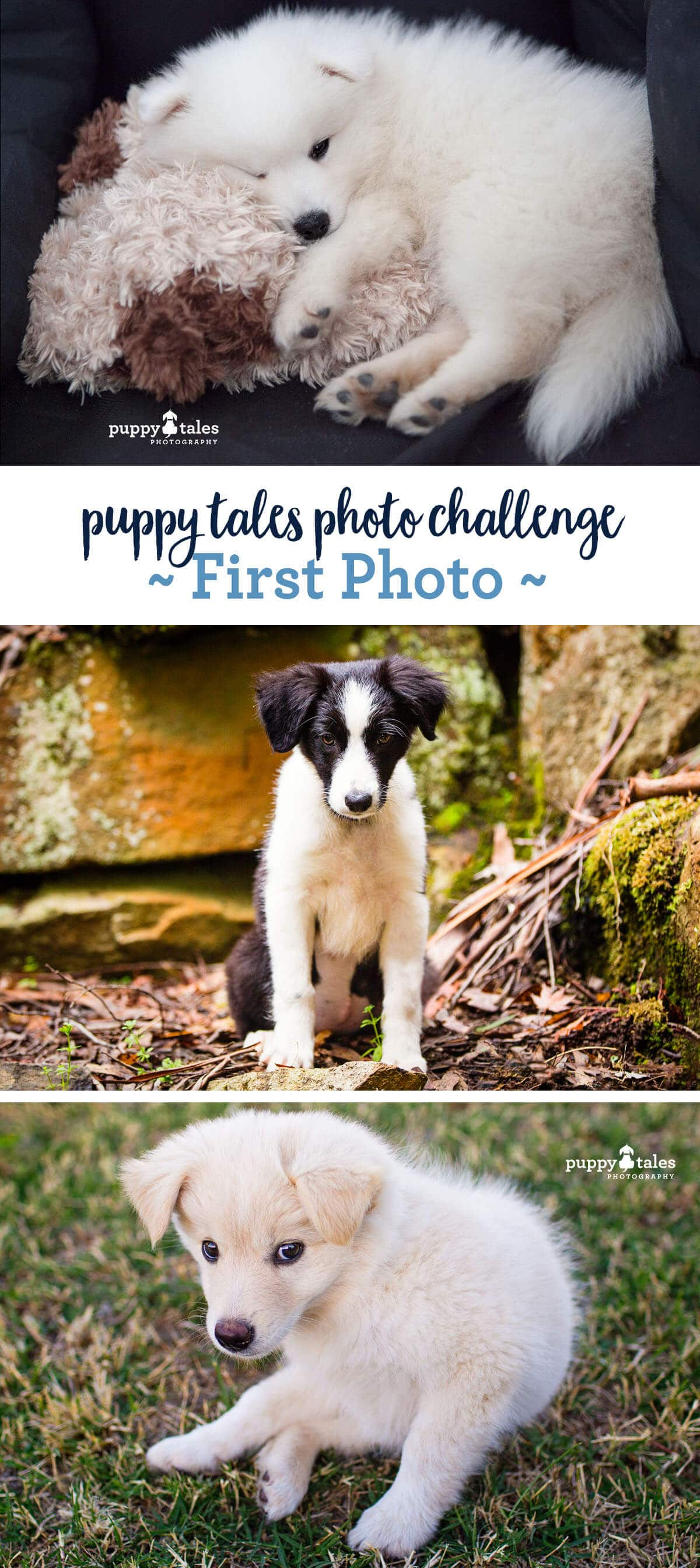 Puppy Tales Dog Photo Challenge ~ First Photo