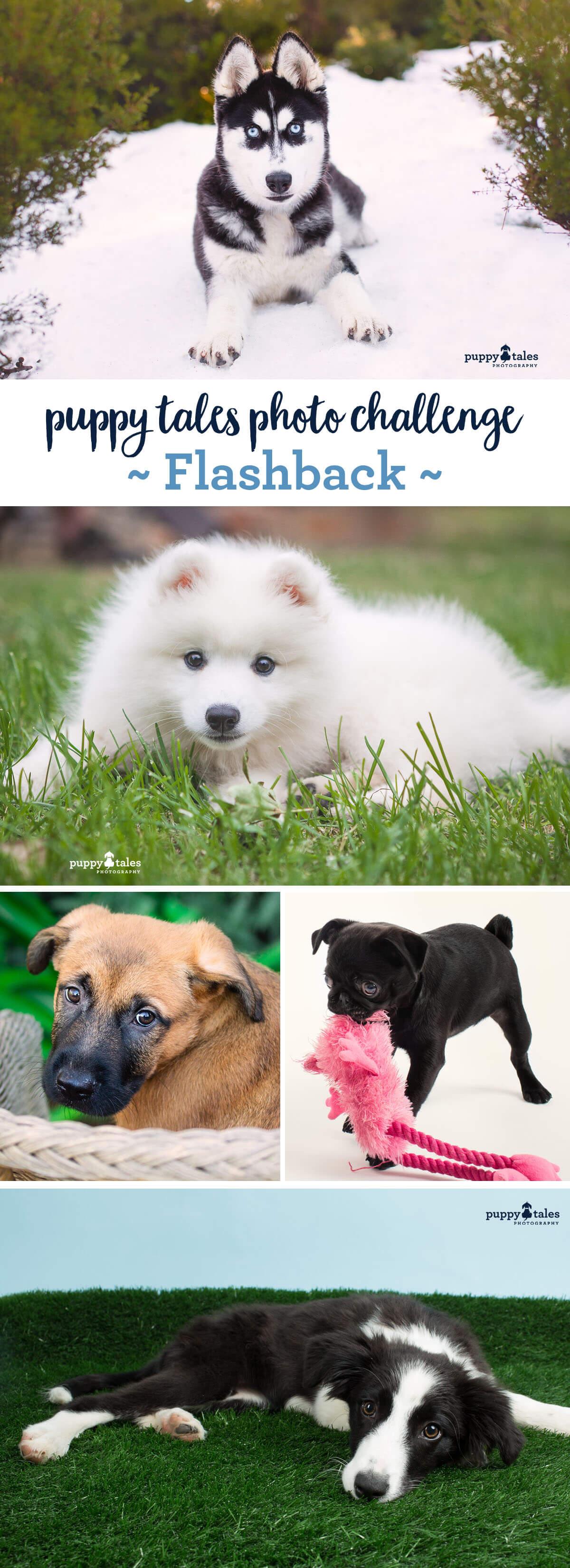 Puppy Tales Dog Photo Challenge ~ Flackback