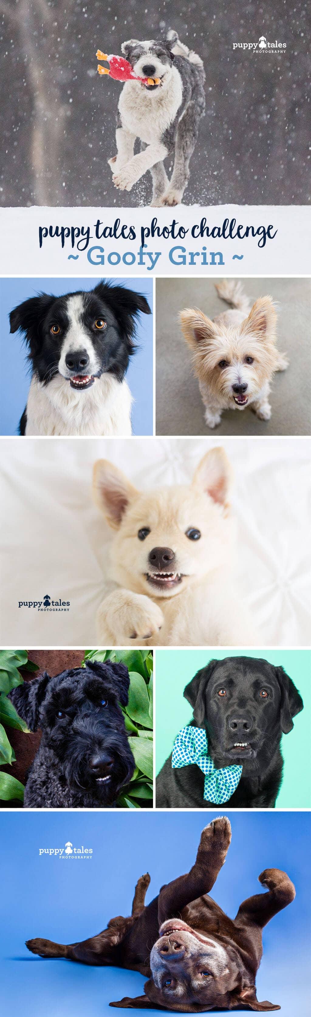 Puppy Tales Photo Challenge ~ Goofy Grin