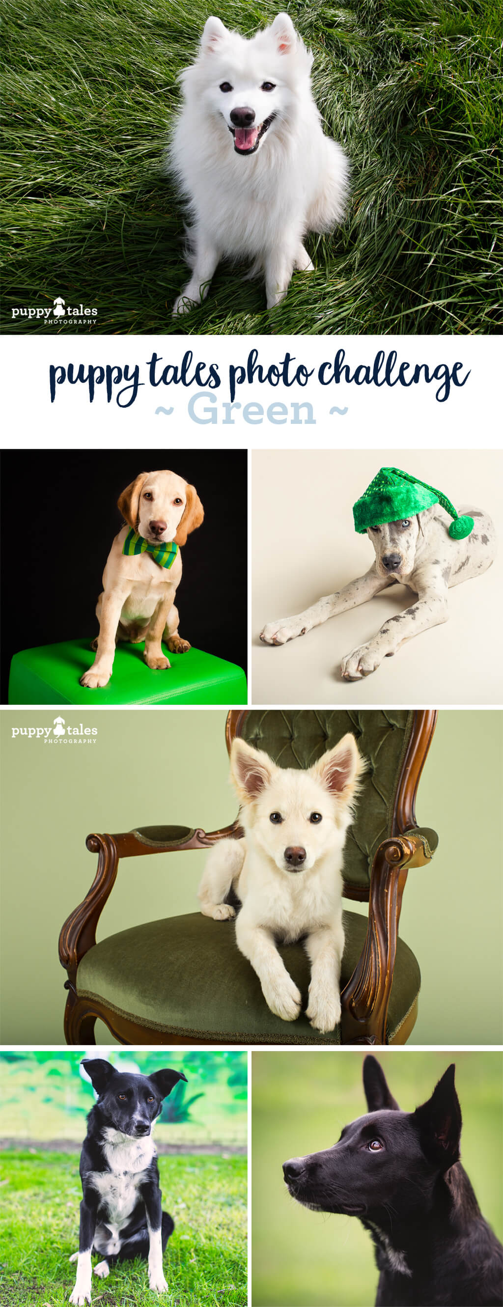 Puppy Tales Photo Challenge - Green