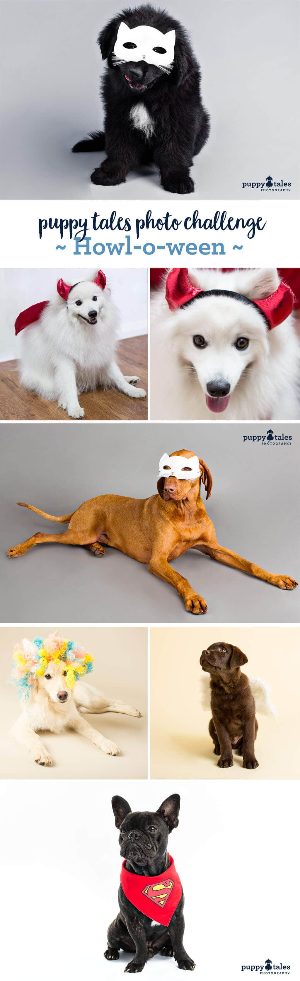 Puppy Tales Photo Challenge ~ Halloween
