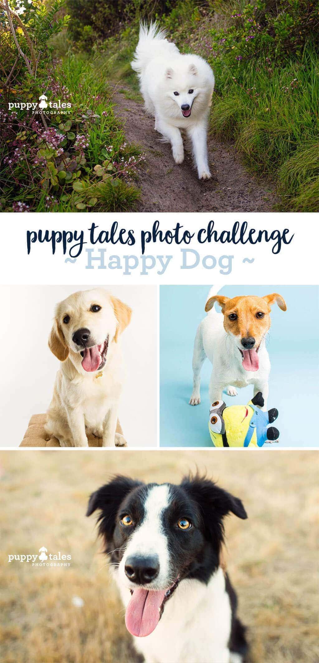 Puppy-Tales-Photo-Challenge-Happy-Dog