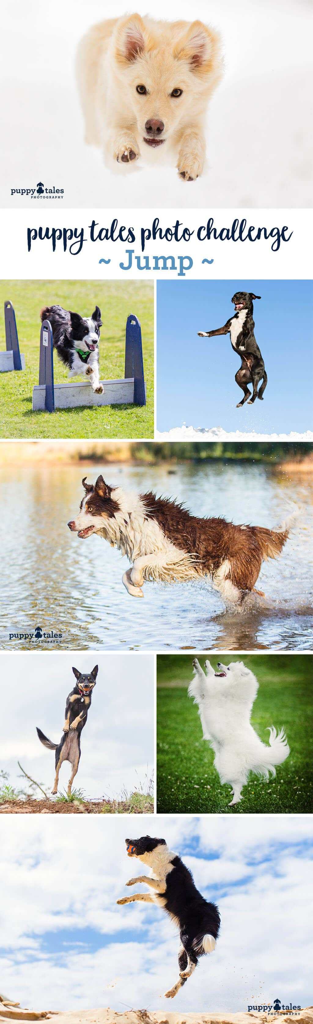 Puppy Tales Photo Challenge ~ Jump