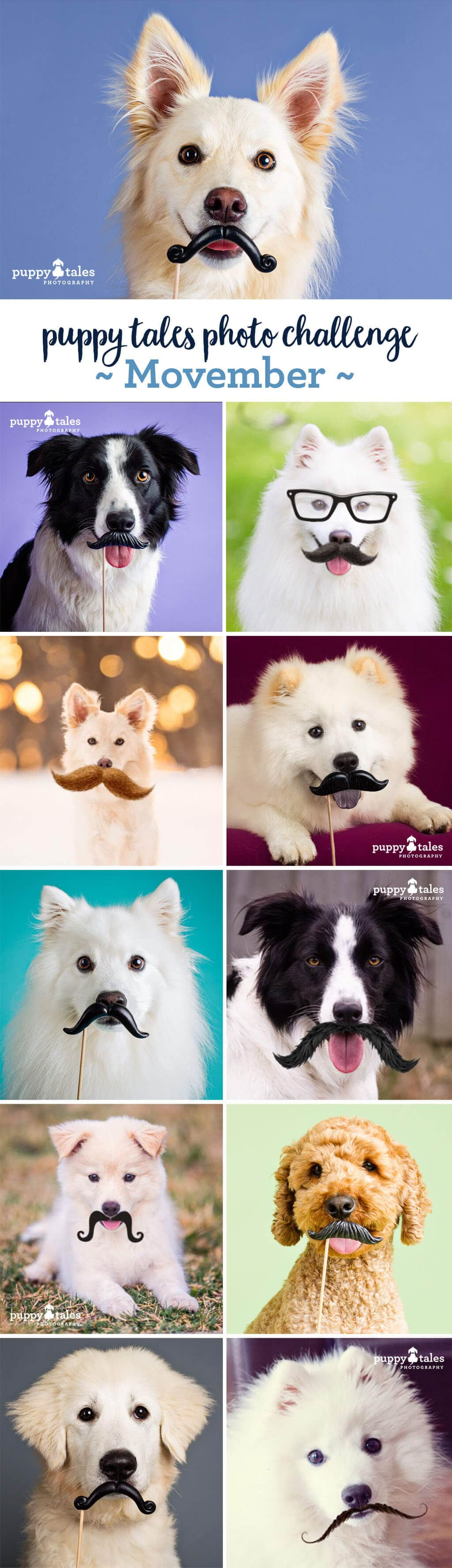 Puppy Tales Photo Challenge ~ Movember