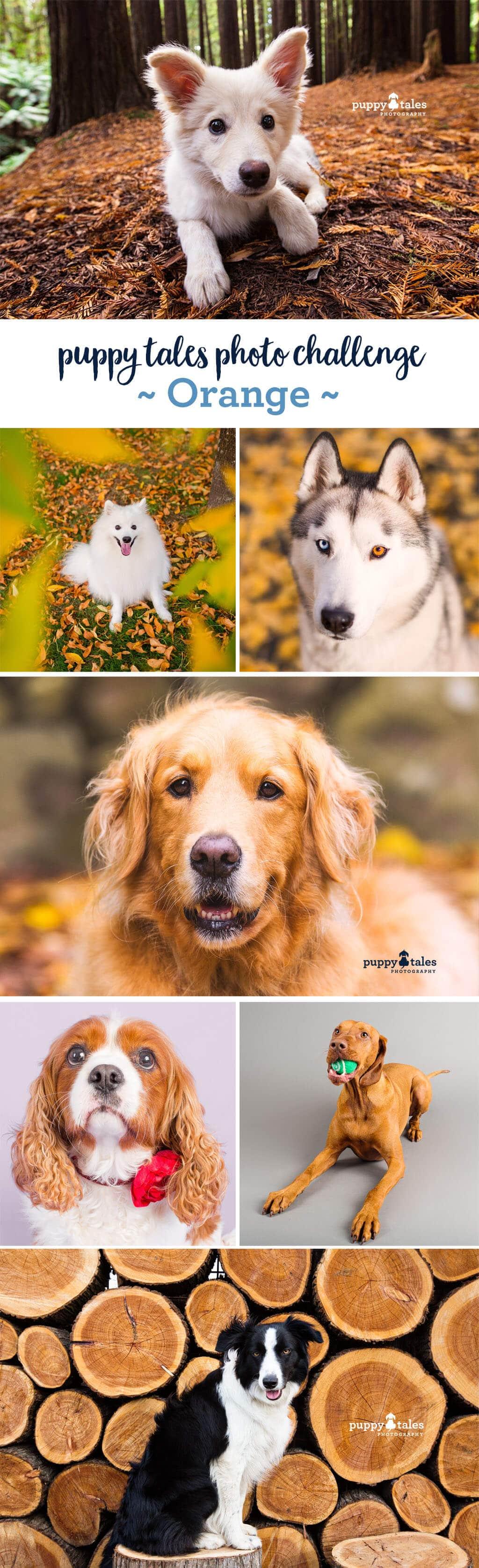 Puppy Tales Photo Challenge ~ Orange