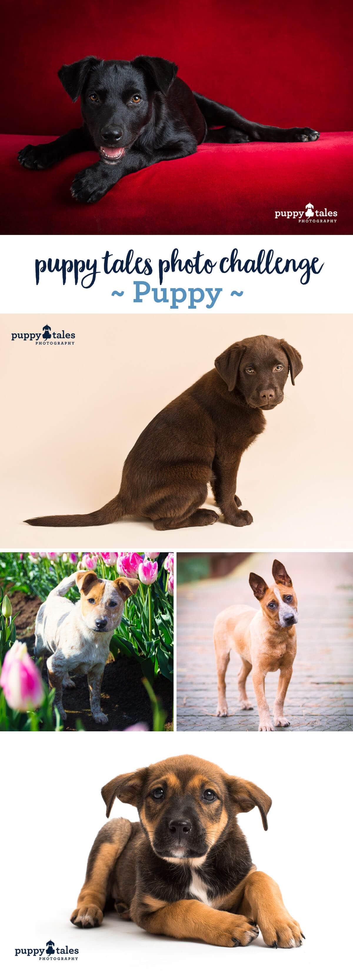 Puppy Tales Photo Challenge - Puppy