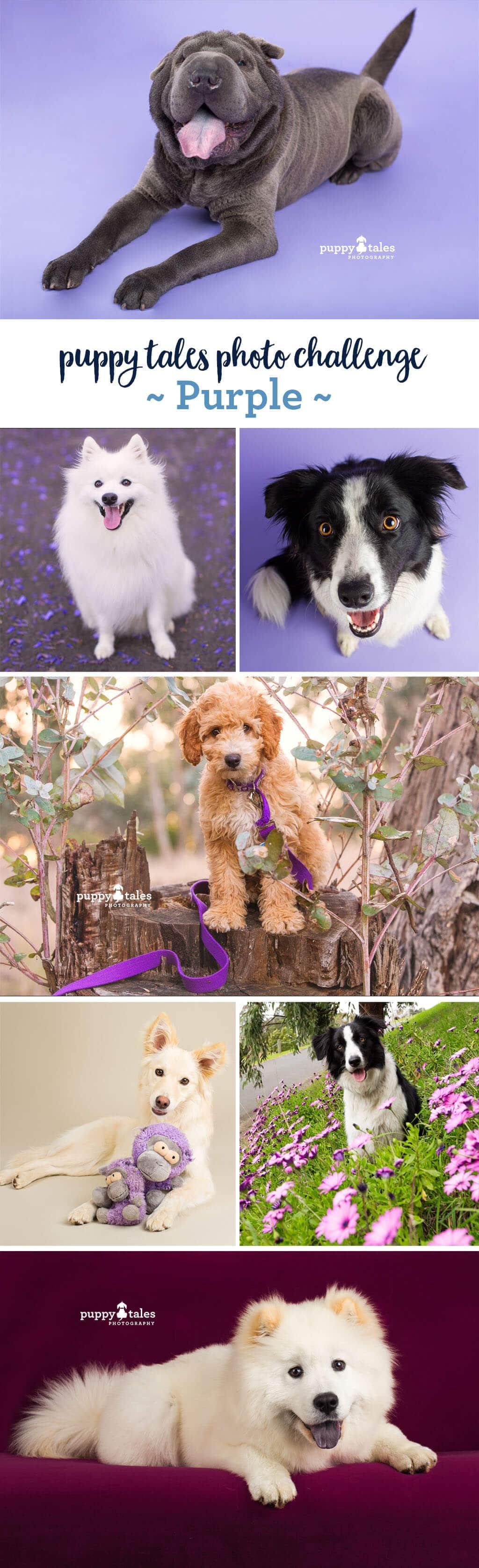 Puppy Tales Photo Challenge ~ Purple