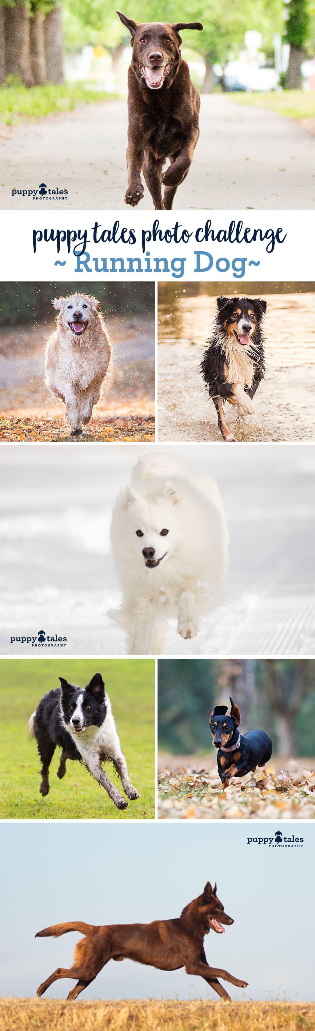 Puppy Tales Photo Challenge ~ Running Dog