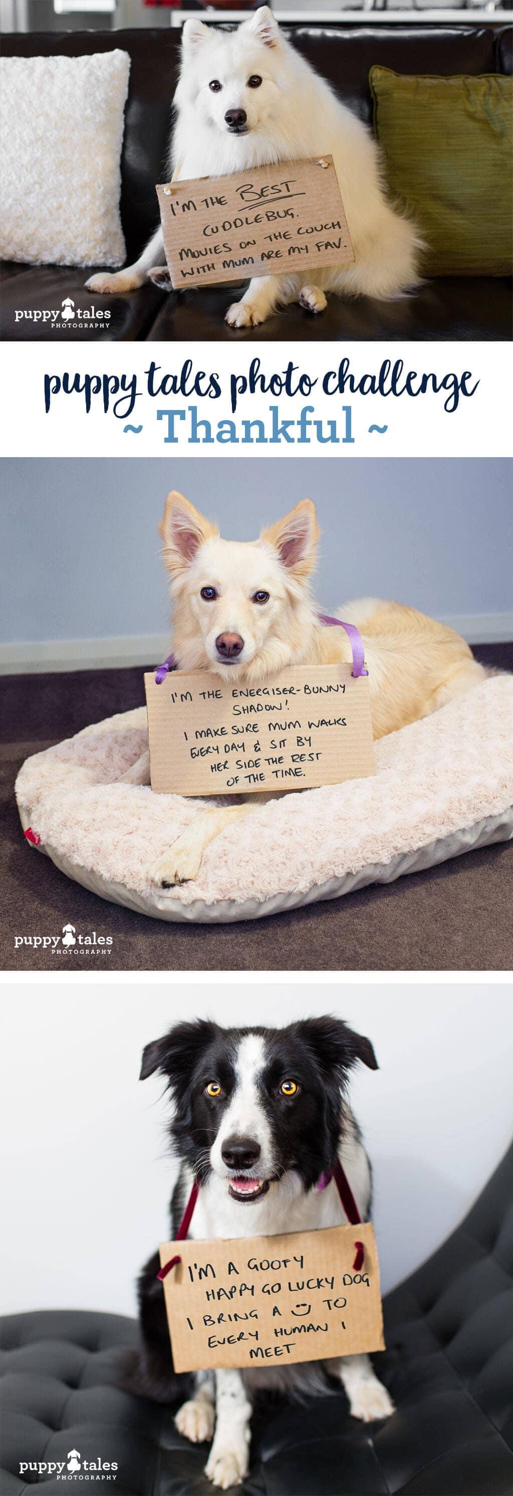 Puppy Tales Photo Challenge ~ Thankful