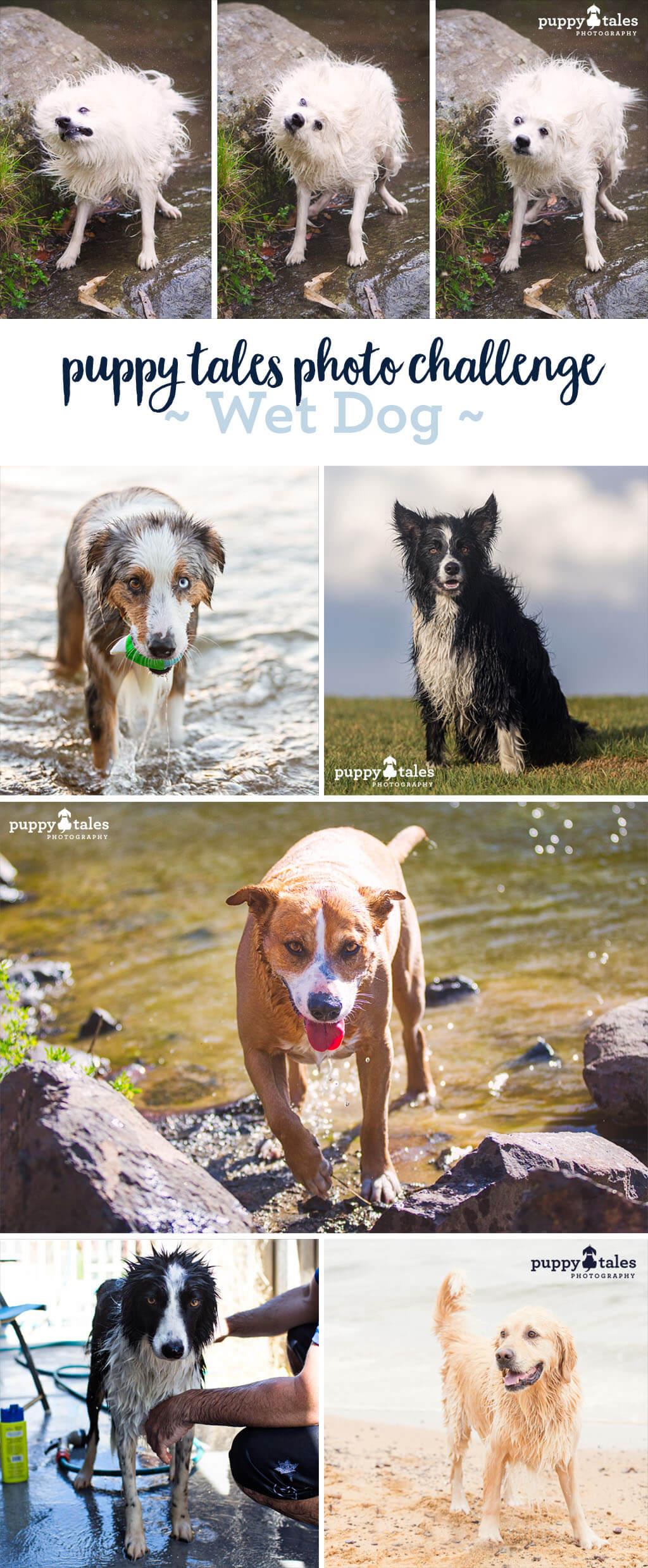 Photo Challenge - Wet Dog