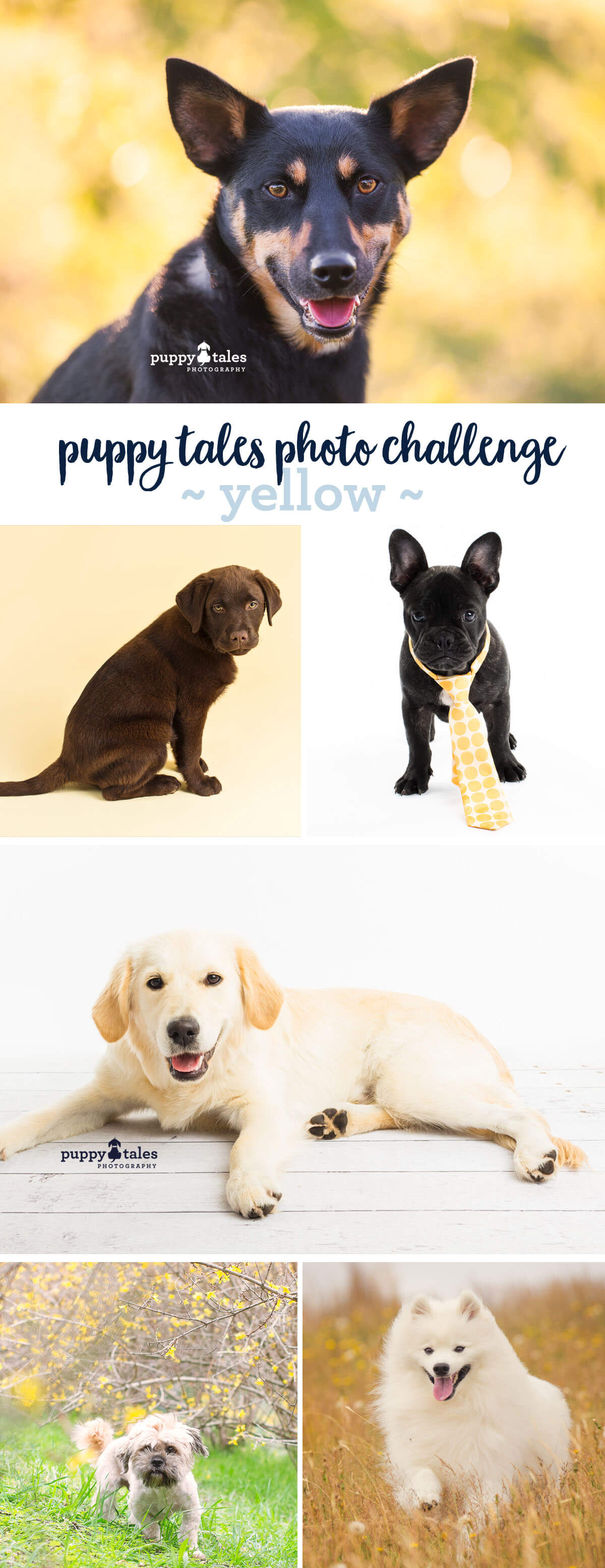 Puppy Tales Photo Challenge ~ Yellow