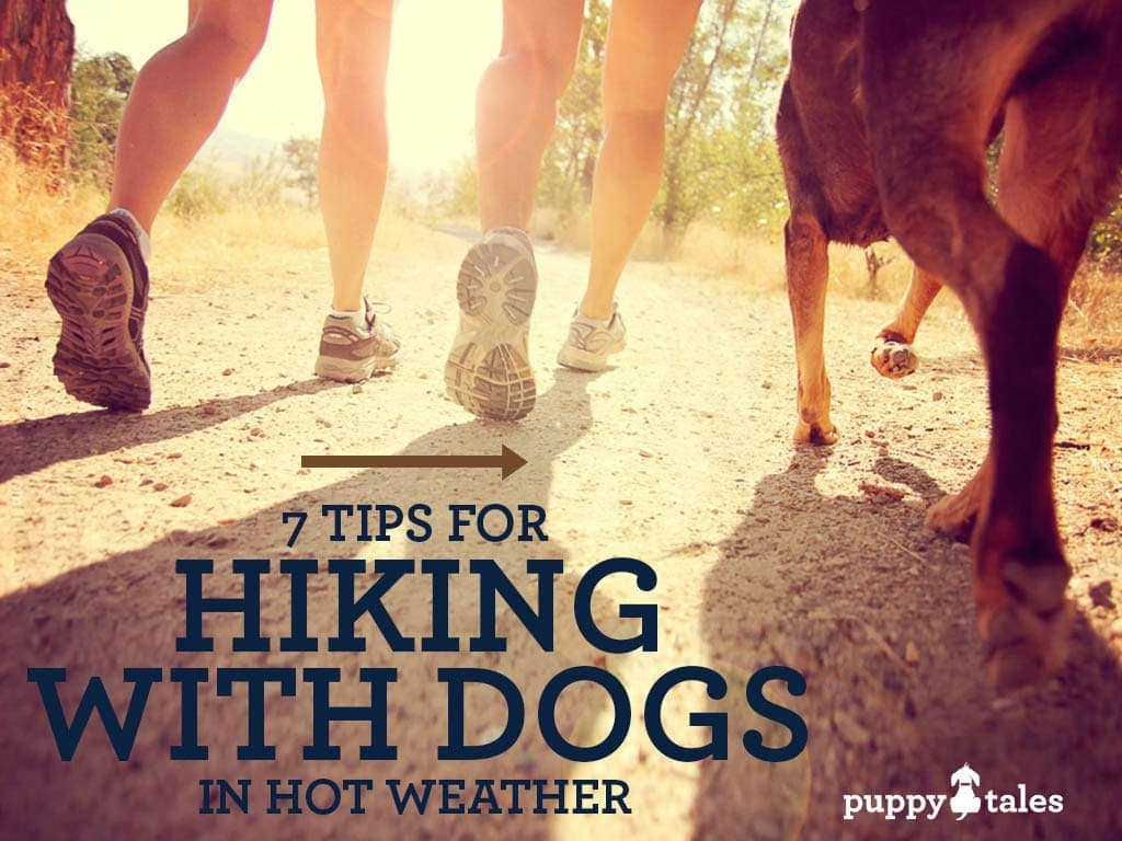 Hiking with your dog in the Summer