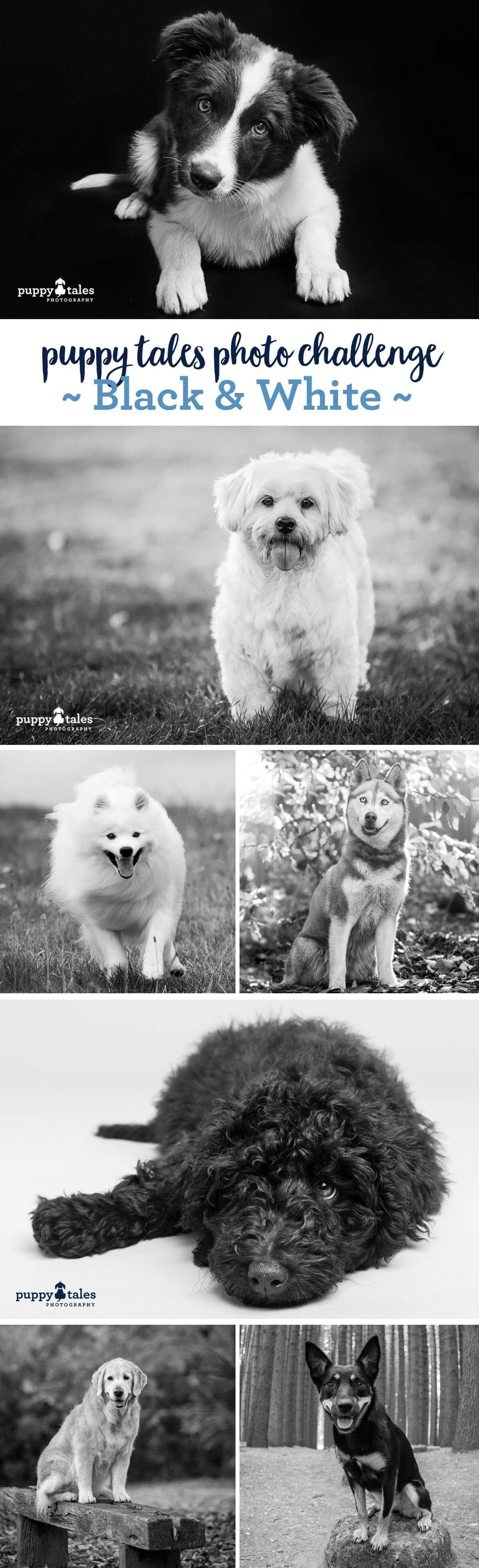 Puppy Tales Photo Challenge ~ Black & White