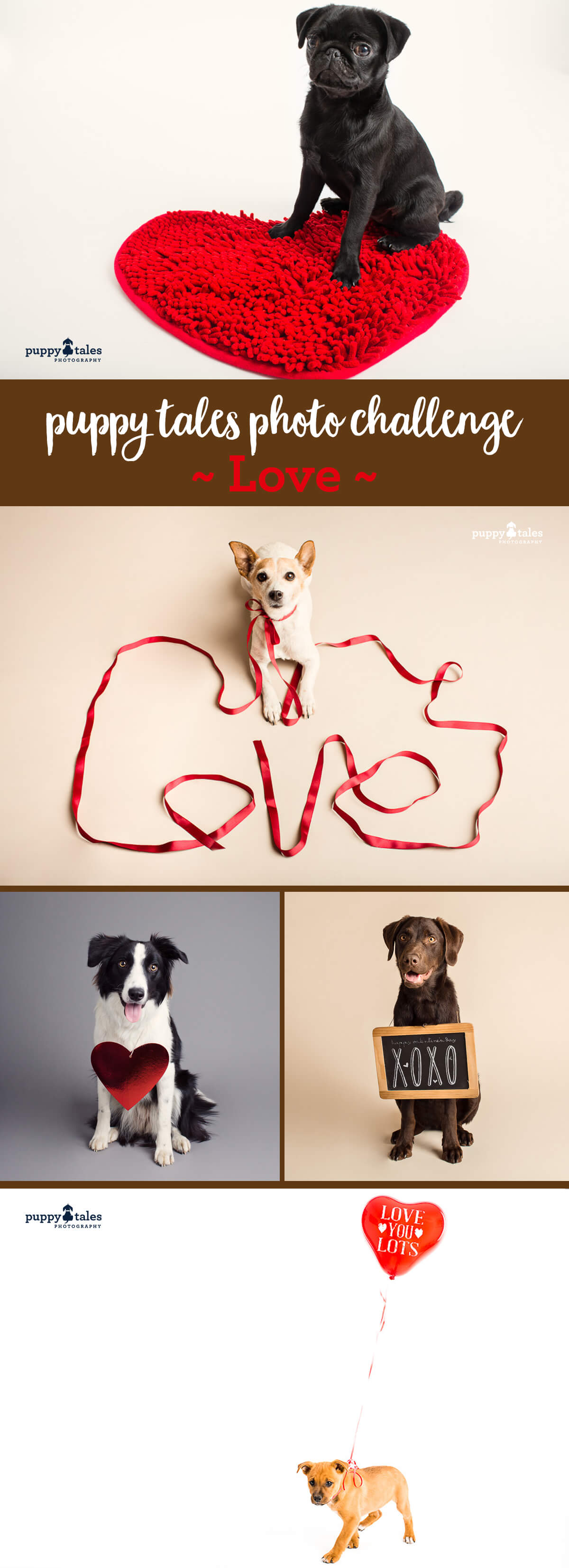 Adorable dog photos for Valentines Day