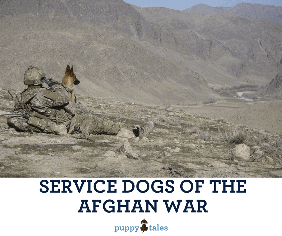 Australian Explosive Detection Dogs of the Afghan War