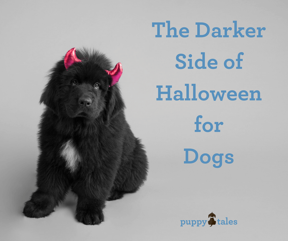 Halloween for dogs may not be a fun time for them.